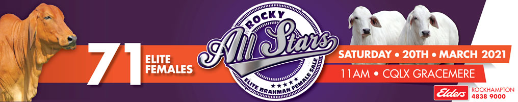 rocky all stars elite brahman female sale web banner v2021