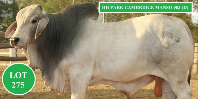 HH PARK BRAHMANS (BIG COUNTRY 2020)