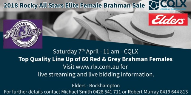 Elders Rocky All Stars Female Sale