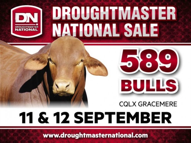 Annual Droughtmaster Sale