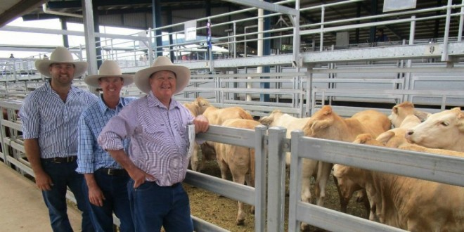 Beef Australia 2018 Ruralco Commercial Cattle Sale