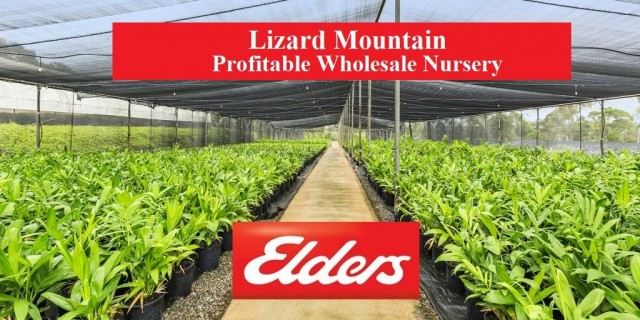 Lizard Mountain Profitable Wholesale Nursery