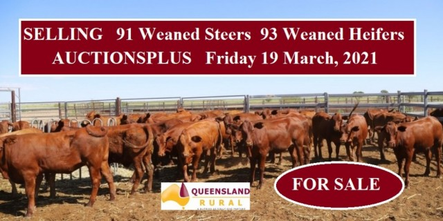 For Sale 91 Weaned Steers and 93 Weaned Heifers