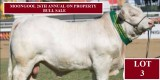 MOONGOOL 26TH ANNUAL ON PROPERTY BULL SALE
