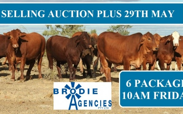 Brodie Selling Friday Auction Plus