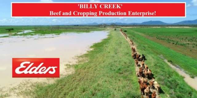 'BILLY CREEK'