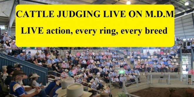 ALL CATTLE JUDGING LIVE ON M.D.M.