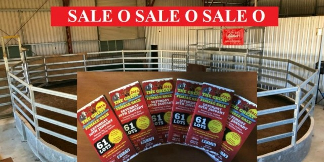 SALE O SALE O SALE O (Great Southern Female Sale)