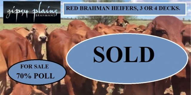 ALL CATTLE ARE SOLD Red Brahman Heifers