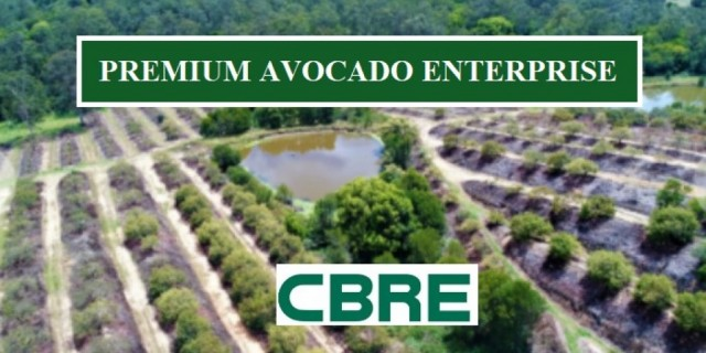 PREMIUM AVOCADO ENTERPRISE (Milligan Farms )