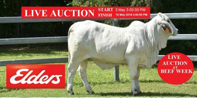 LIVE AUCTION AT BEEF