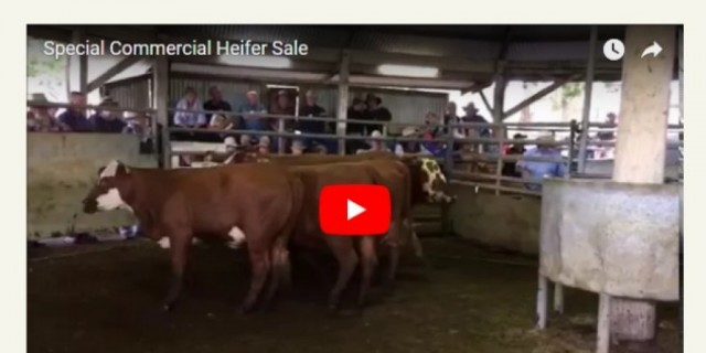 Special Commercial Heifer Sale