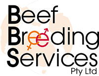Beef Breeding Services