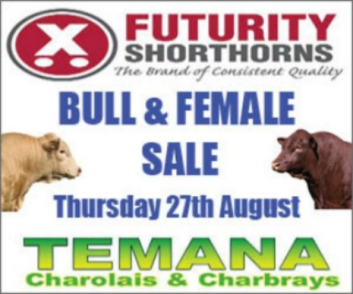 Futurity Shorthorns