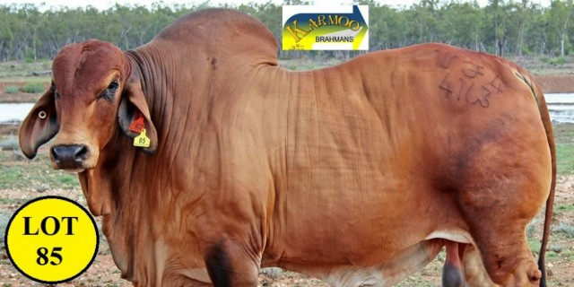 Karmoo Brahmans Big Country Sale 2020