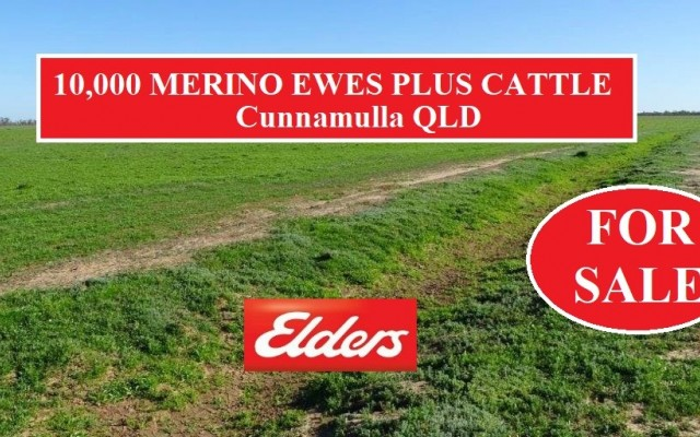 10,000 MERINO EWES PLUS CATTLE – FOR SALE