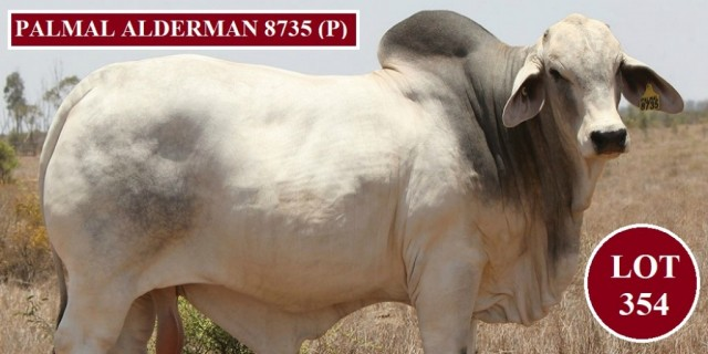 Palmal Brahmans Big Country 2020 Sale