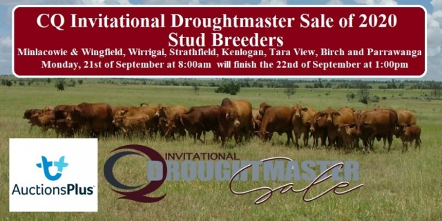 CQ Invitational Droughtmaster Sale of 2020.