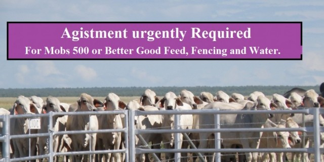 Agistment urgently Required