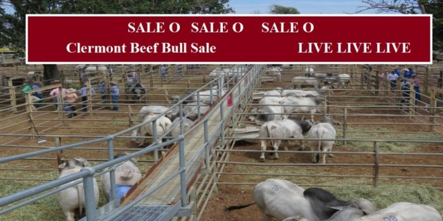 Results  Clermont  Beef Bull Sale