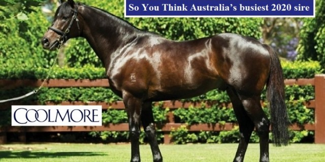 Upgrade in top Qld's sire's mares shown at Easter