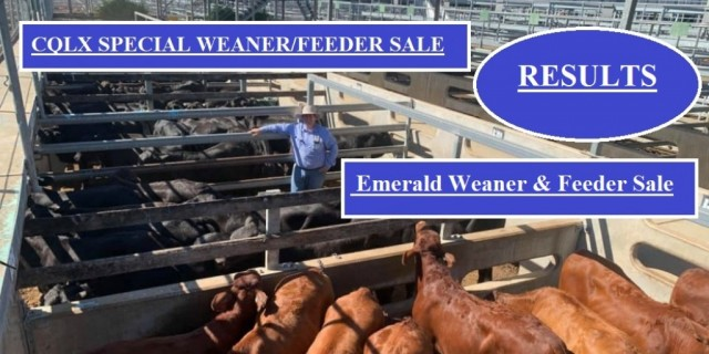 CQLX AND EMERALD WEANER/FEEDER RESULTS