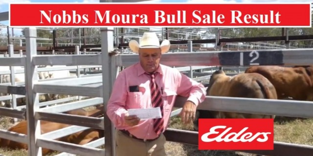 Moura Bull Sale 18TH Sept  RESULTS